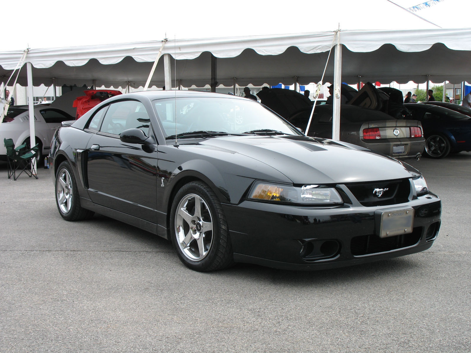 2003 Ford Mustang Cobra - The Terminator